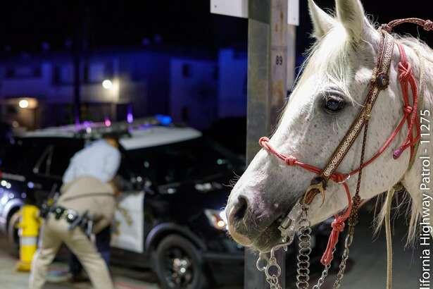 California Highway Patrol officers in Santa Fe Springs said that an intoxicated man steered a horse onto a highway in Southern California Saturday.