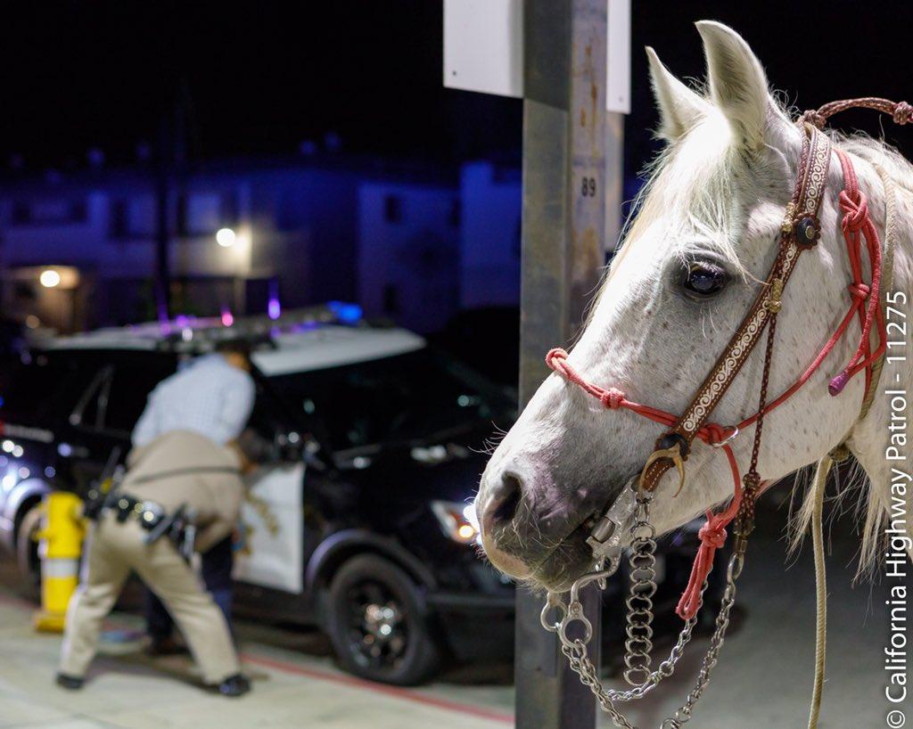 No course for a horse: Man rides onto California freeway thumbnail