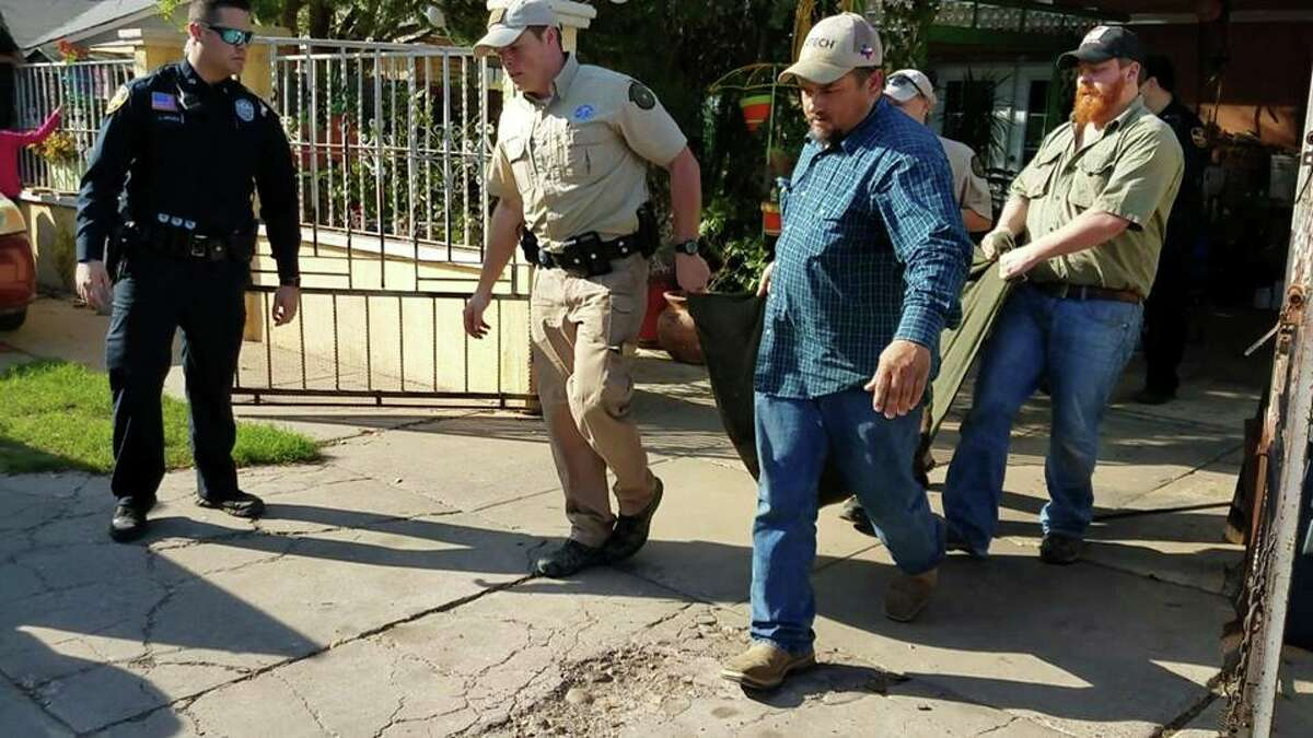 Authorities captured a mountain lion on Sunday, Feb. 25, 2018 in the Santa Rita Subdivision in south Laredo.