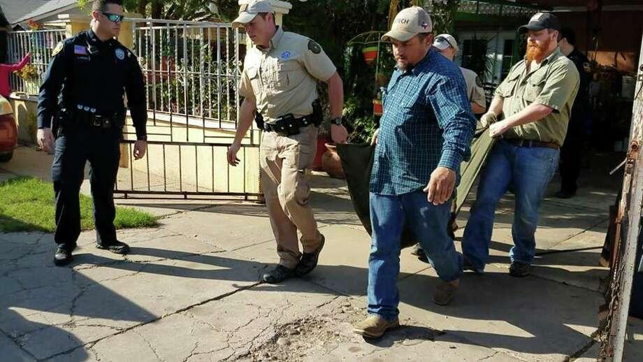 Authorities captured a mountain lion on Sunday, Feb. 25, 2018 in the Santa Rita Subdivision in south Laredo. Photo:  Courtesy /Laredo Police Department