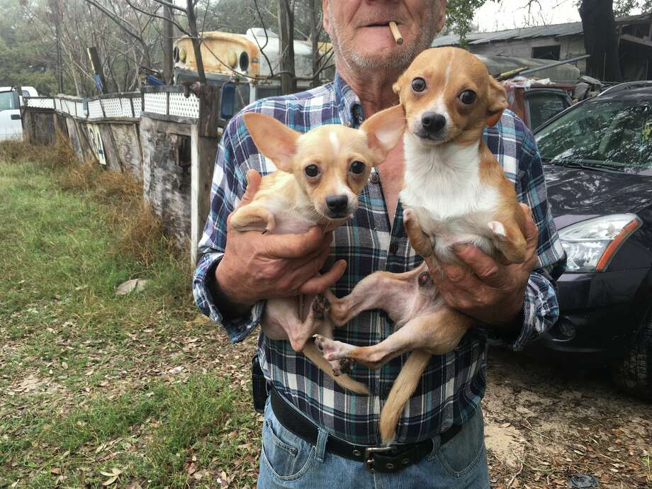 Several dogs were taken by Atascosa County Animal Control after they were found to be living in inhumane conditions on Feb. 23, 2018. Photo: Atascosa County Animal Control