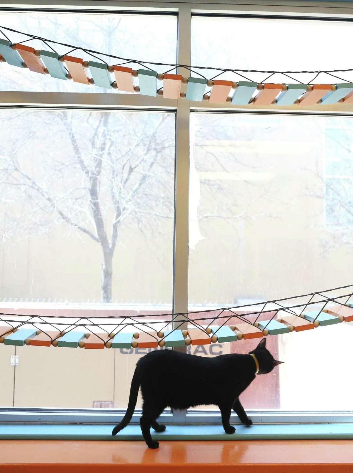 A cat looks out the window of the Haven for Hope cattery on Feb. 26, 2018. The $12,000 cattery renovation was funded by the nonprofit, The Jackson Galaxy Project, and constructed by Rescue Build, a related nonprofit. The cattery and a dog kennel provide housing for pets owned by clients of Haven for Hope.