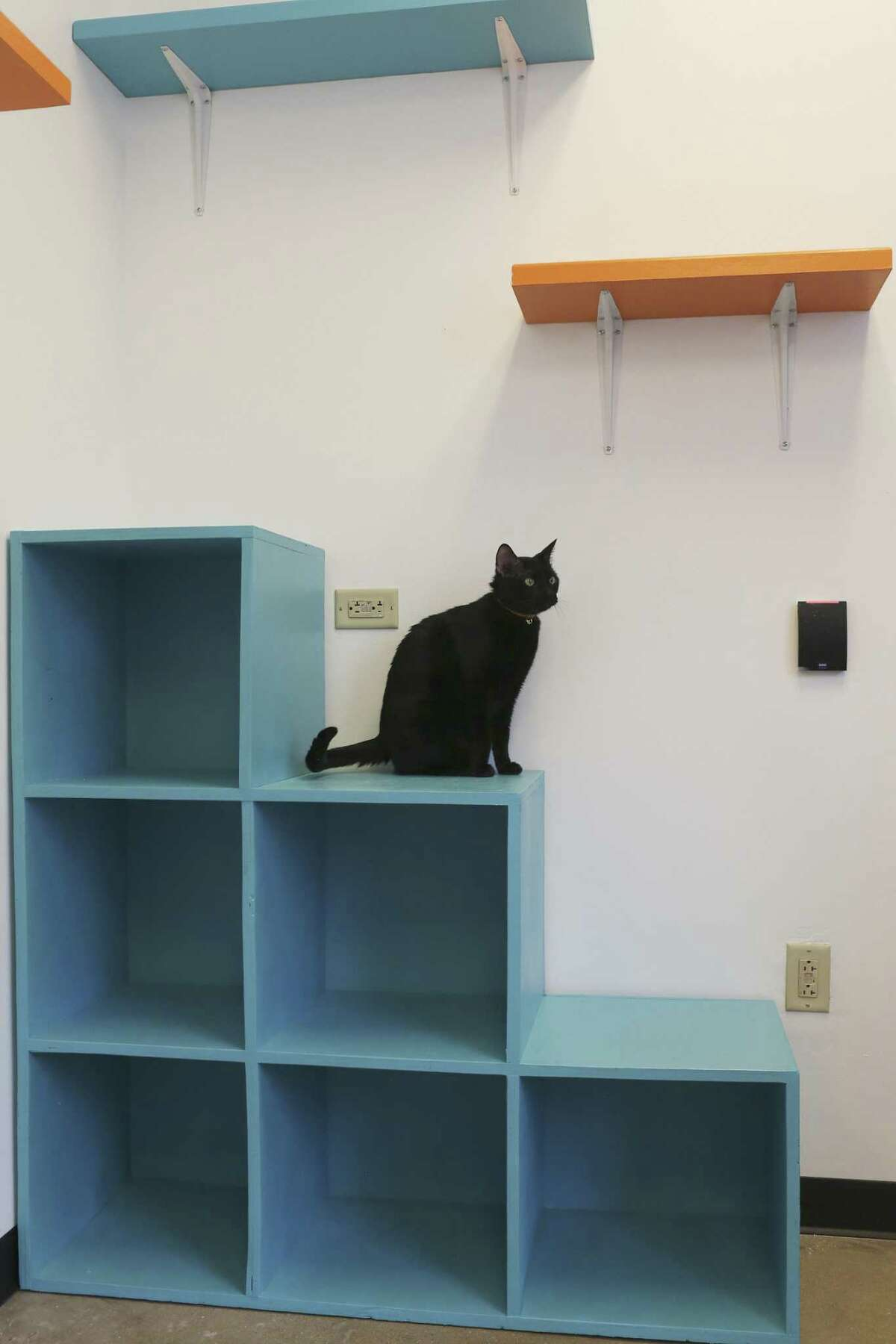 A cat checks out the renovated cattery at Haven for Hope, the city's main shelter for people who are homeless. When they come to Haven for services, some of them can't or don't want to leave their pets behind.