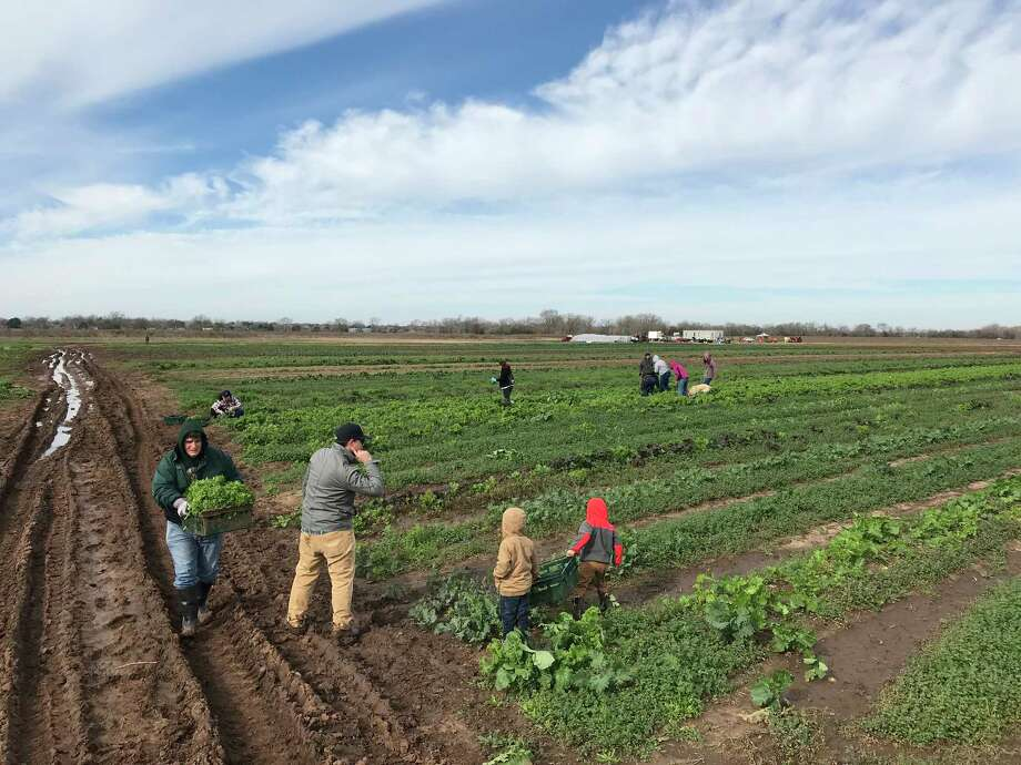 Loam Agronomics farm in Richmond supplies local restaurants and others with produce.