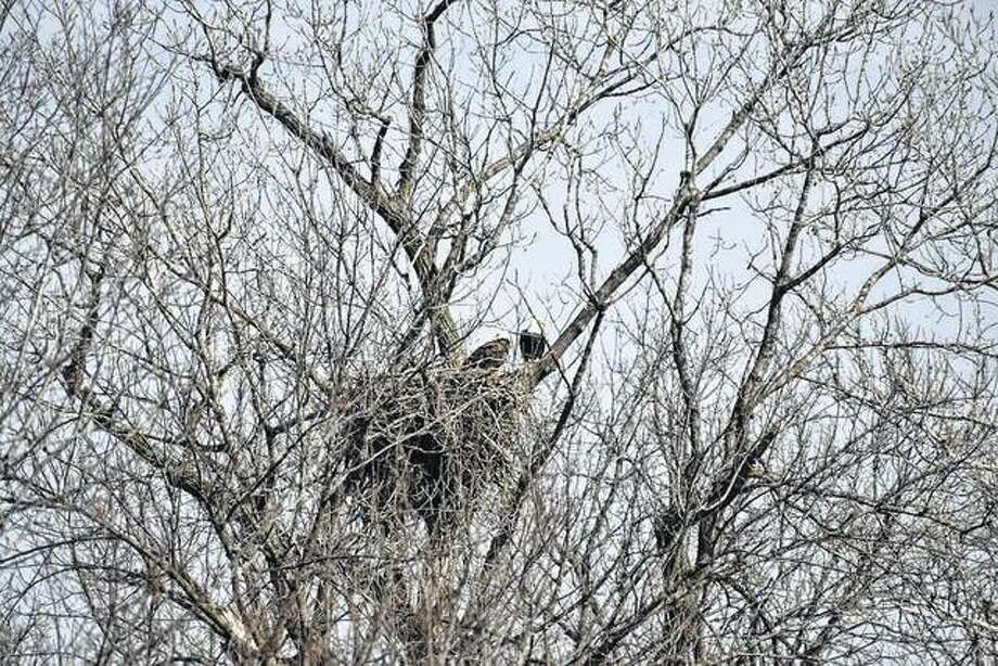A pair of eagles spends some quality time together outside Canton, Missouri.