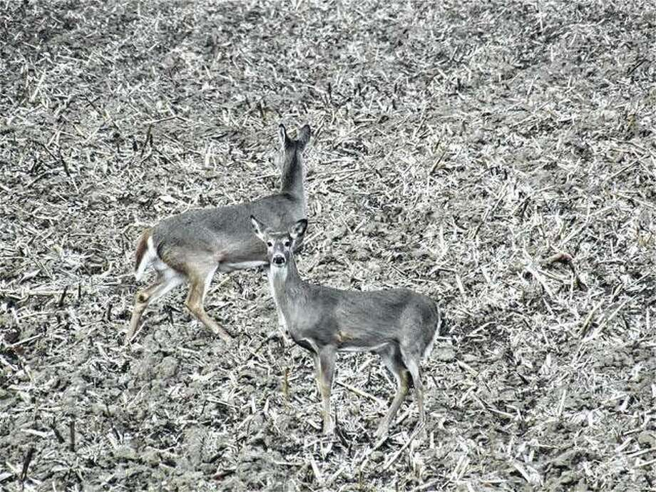 A couple of deer survey their surroundings in a rural field.