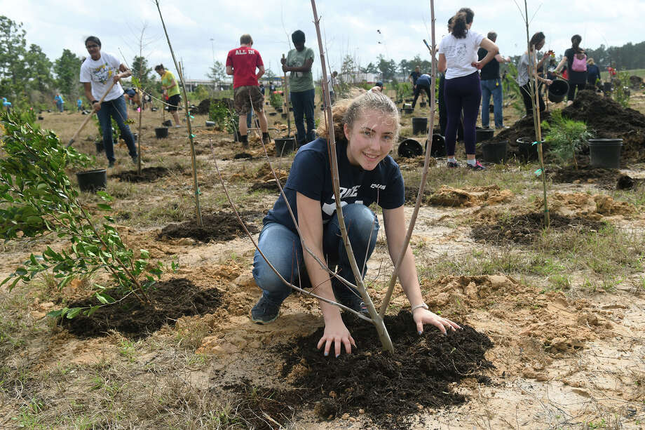 Lea Godret-Miertschin, 18, a freshman Chemical Engineering major at Rice Univ., works for the school's team sponsored by the University's Green Dorm Initiative during the Houston Area Urban Foresty Council's 11th annual tree planting competition held at the detention basin on Texas 249 and Humble Road on Feb. 24, 2018. (Photo by Jerry Baker/Freelance) Photo: Jerry Baker, Freelance / Freelance