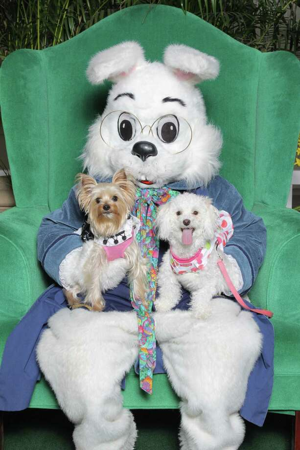 The Easter Bunny plans to take up temporary residence at Katy Mills Mall starting in March.  Katy Mills will host Pet Photos with the Bunny on March 25 from 6-7:30 p.m. where visitors can bring their furry friends for photos with the Easter Bunny. Photo: Katy Mills