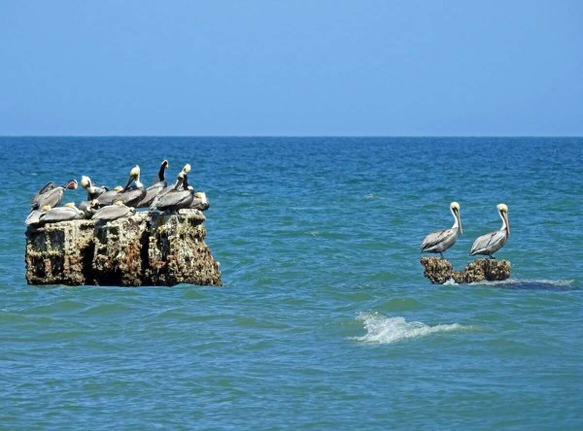 Padre Island National Seashore is perfect for observing nature, from nesting sea turtles to bird watching. The area is also great for fishing.