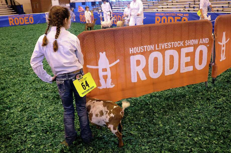 Stormy Morgan, 10, of Tarkington, Texas gets ready to show her goat, Foolish Pleasure, during the Houston Livestock Show and Rodeo on Tuesday, Feb. 27, 2018, in Houston. Photo: Elizabeth Conley / Elizabeth Conley / Houston Chronicle / © 2018 Houston Chronicle