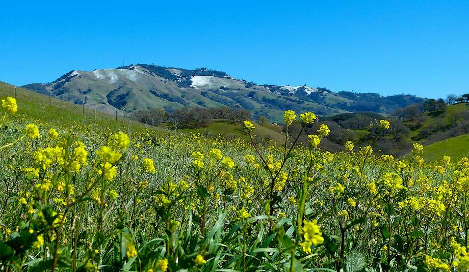 Last week's surprise snowfall on Mount Diablo starts to melt in the morning sun, with blooming mustard in the foreground. Photo: Tom Stienstra, Brian Murphy / Special To The Chronicle