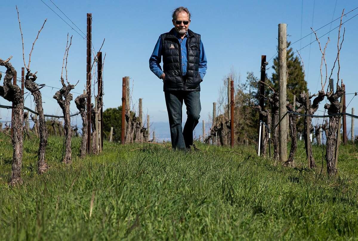 Winemaker Emeritus Paul Draper walks amongst grapevines at Ridge Monte Bello Winery Wednesday, Feb. 21, 2018 in Cupertino, Calif.