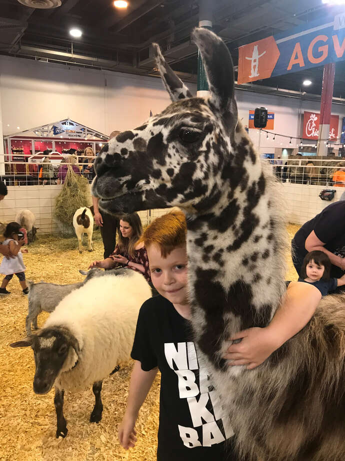 Gauge Humphrey, 7, hugs Molly the llama inside the Great American Petting Zoo located within the NRG Center at the Houston Livestock Show and Rodeo. Photo: Shelby Webb