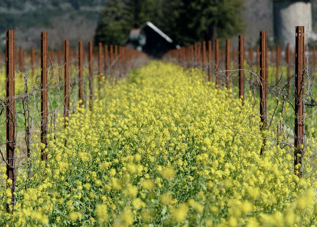The best places to taste wine in St. Helena