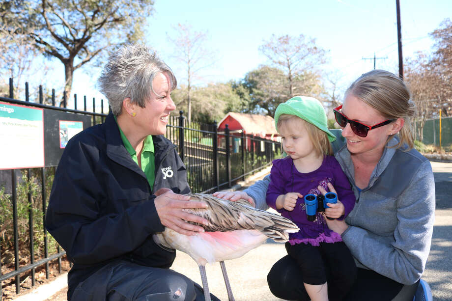 Serenity Hyland holds a baby flamingo and introduces it to a few zoo visitors. Photo: Lindsey Carnett, San Antonio Express-News