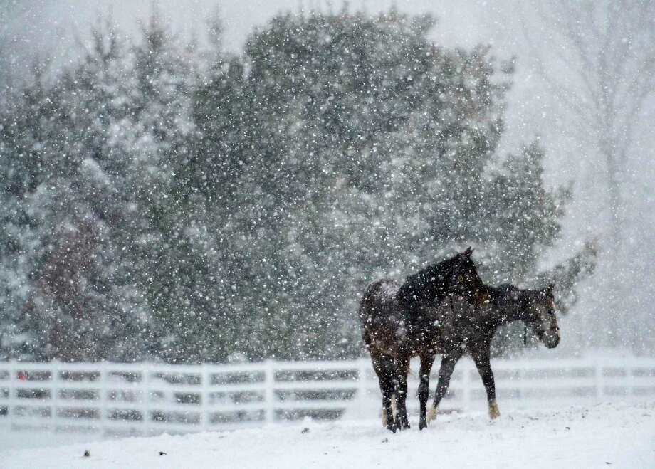 Yearling enjoy the snow at Song Hill Farm during a nor'easter snow storm that hit the area Friday  March, 2 2018 Saratoga Springs, N.Y.   (Skip Dickstein/Times Union) Photo: SKIP DICKSTEIN, Albany Times Union