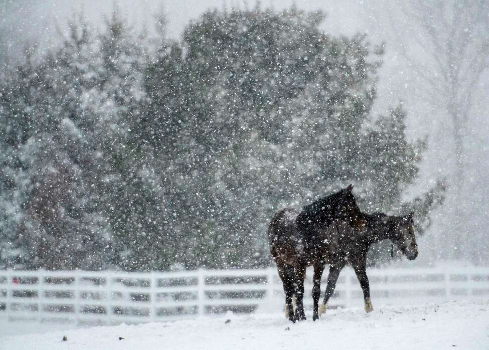 2017-18: 77.3 inches.The season kept going ... and going. The Capital Region's snowfall total for March officially broke into the Top 10. Yearlings enjoyed the snow at Song Hill Farm in Saratoga Springs during a nor'easter in early March.
