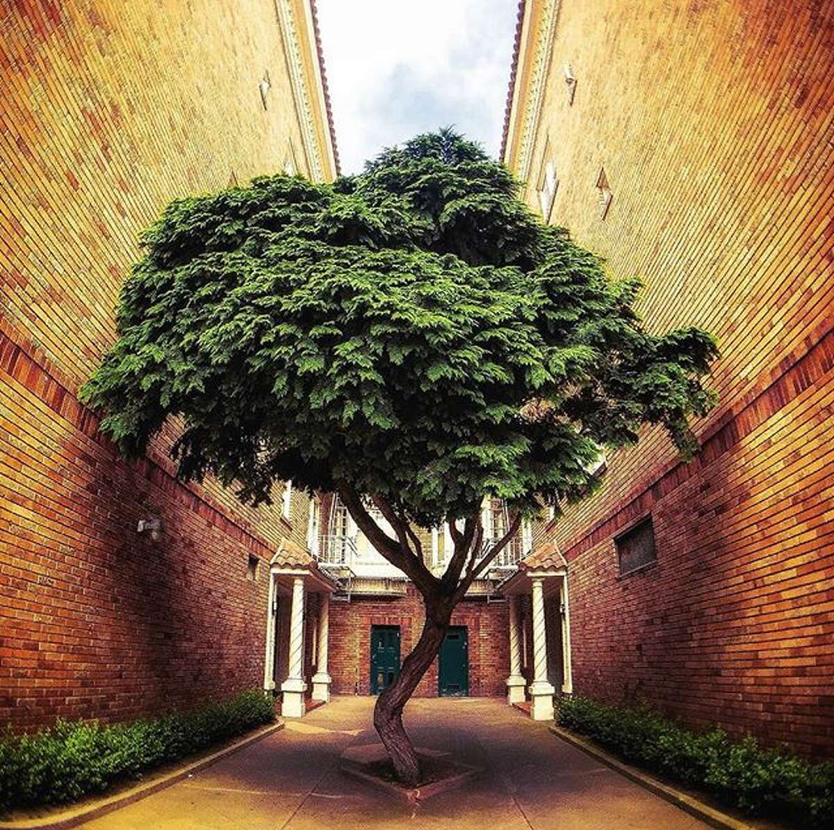 @brukdahl loves this tree in San Francisco.