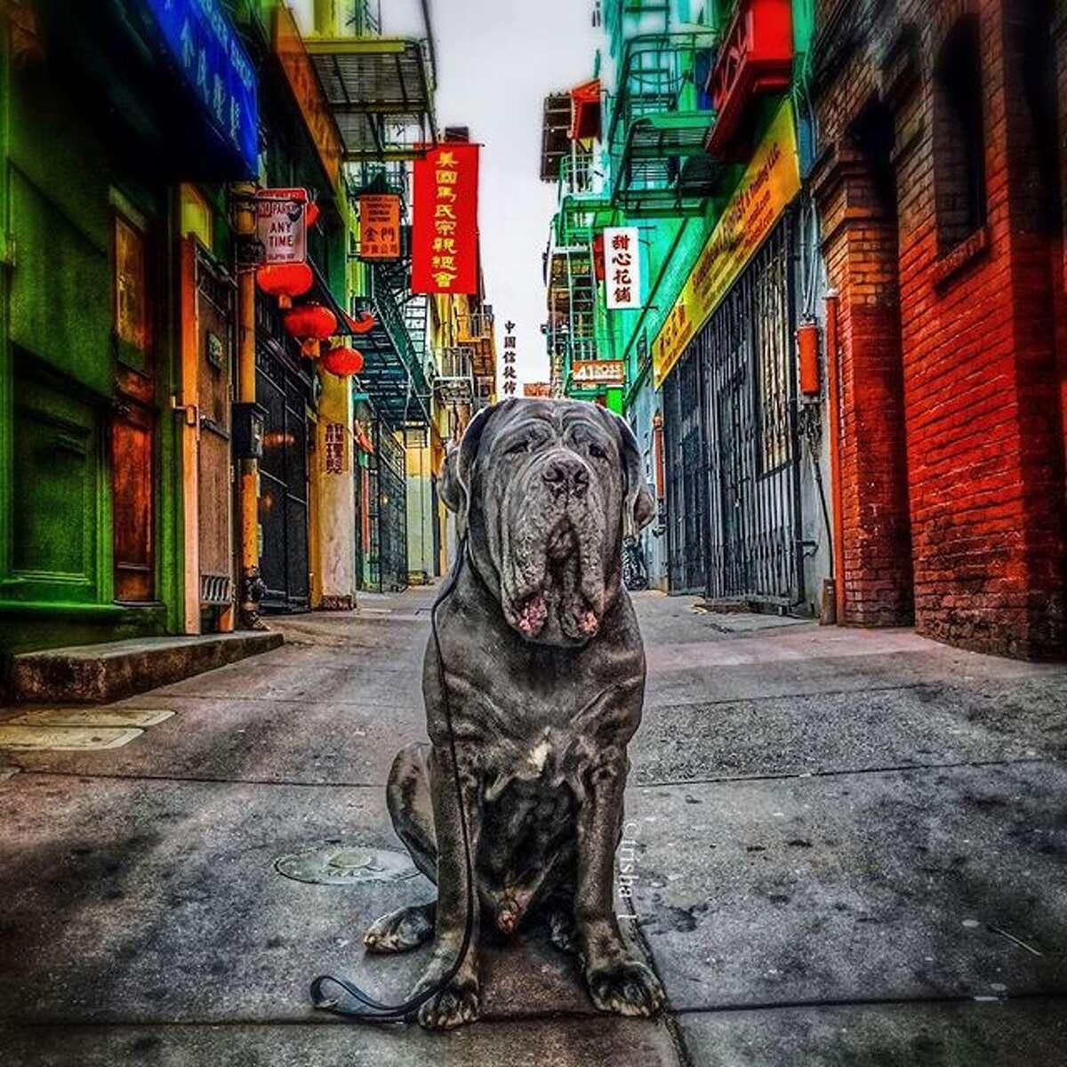 @trisha_l celebrates the Year of the Dog with Dozer.