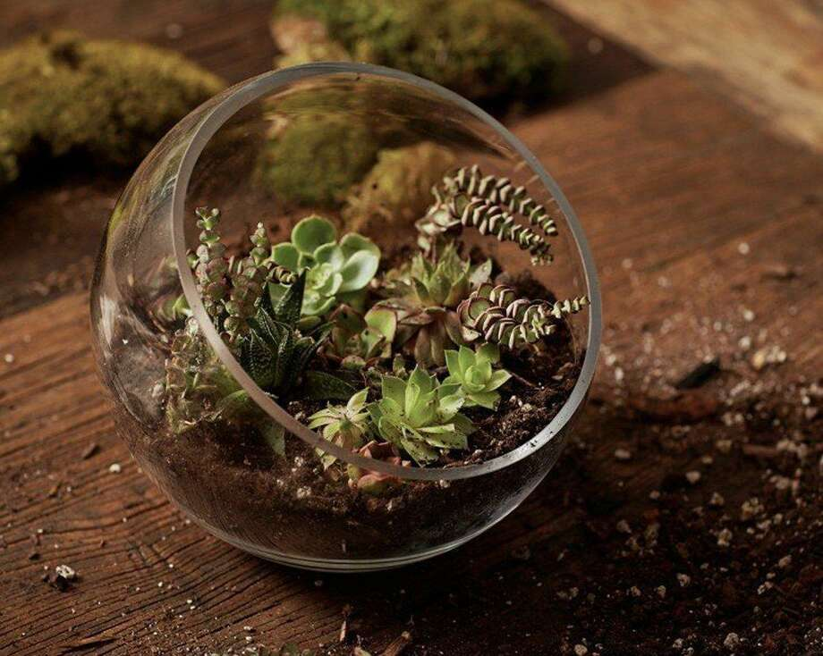 Gather in the beautiful heated and weather-protected pavilion and create easy-to-care-for terrariums. Photo: McClatchy-Tribune News Service / MCT
