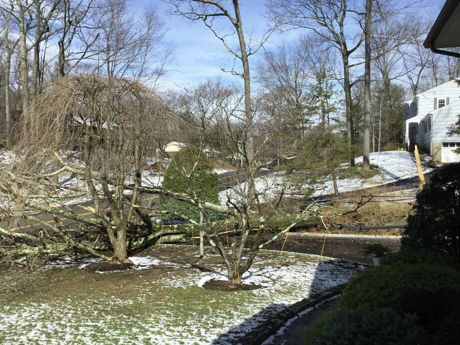 A Stamford couple has been trapped in its home for two days after a tree and live wires fell in its yard and driveway. Photo: / Contributed Photo