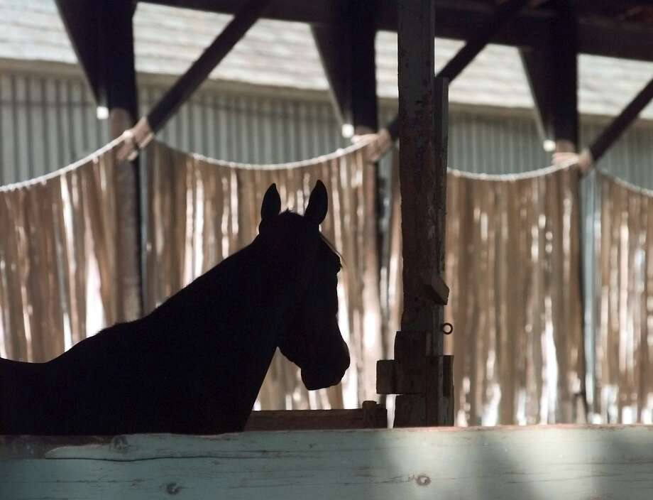 Times Union staff photo by Cindy Schultz -- A thoroughbred is silhouetted against standing bandages that are hanging to dry at Todd Pletcher's stables Saturday, July 31, 1999, at the backstretch of Saratoga Race Course in Saratoga Springs, NY. Photo: CINDY SCHULTZ / ALBANY TIMES UNION