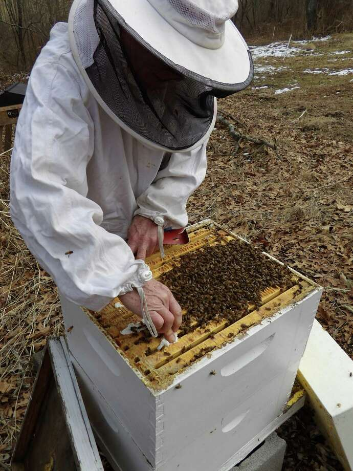 """Flanders Nature Center will hold its annual beekeeping course on the art and science of beekeeping. The workshops will promote the importance of pollinators and show students how to start and keep a hive, as well as brainstorm new ideas to help keep pollinators alive and thriving. This series will consist of three classes and two field trips to an apiary. The beekeeping classes is a hands-on experience with bees and be led by Al Avitabile, Emeritus Professor in the Biology Department at UCONN, co-author of """"The Beekeeper's Handbook"""" and noted beekeeper and researcher. Classes will be held on three consecutive Friday evenings in March. The first session will be held on Friday, March 16 at 7 p.m. in the Flanders Studio located at 5 Church Hill Road in Woodbury. The other two classes will be held on March 23 and 30. It will also include two Saturday field trips in April to a nearby apiary to install a package of honey bees and to then check on them a week after that installation. The cost for all the sessions is $85 for Flanders' members and $120 for nonmembers. Those interested may register online at www.flandersnaturecenter.org or call 203-263-3711, ext. 10, for more information. Photo: Photo Courtesy Of Flanders Nature Center"""