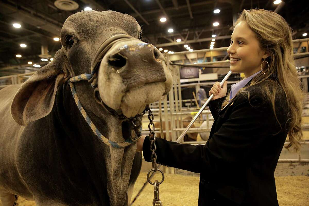 Logan Goudeau, an FFA student from East Brenard ISD, poses with her Brahman bull at the Houston Livestock Show and Rodeo on Thursday, March 1, 2018, in Houston. During Hurricane Harvey, she helped direct air boats and a FEMA helicopter to wrangle her family's cattle to dry land, and organized efforts to drop feed for animals at some of the area's most flooded sites.( Elizabeth Conley / Houston Chronicle )
