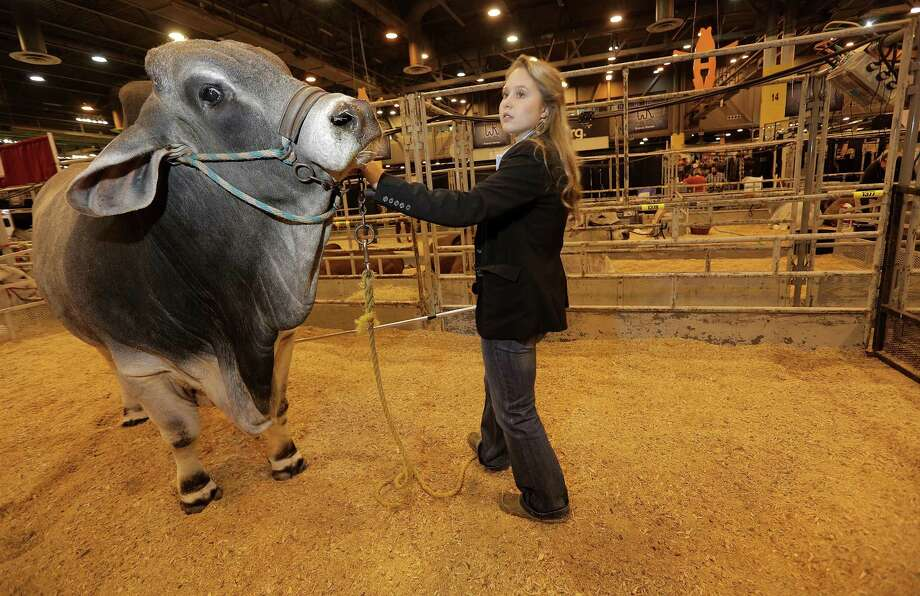 Logan Goudeau, an FFA student from East Brenard ISD, poses with her Brahman bull at the Houston Livestock Show and Rodeo on Thursday, March 1, 2018, in Houston. During Hurricane Harvey, she helped direct air boats and a FEMA helicopter to wrangle her family's cattle to dry land, and organized efforts to drop feed for animals at some of the area's most flooded sites. Photo: Elizabeth Conley / Elizabeth Conley / Houston Chronicle / © 2018 Houston Chronicle