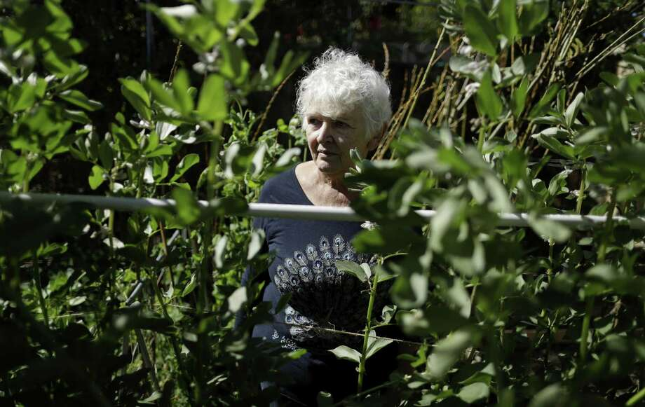 In this March 2, 2018, photo, Christine Sheppard poses for a picture in her backyard garden in Oceanside, Calif. Sheppard said she sprayed Roundup for years to control weeds on her coffee farm in Hawaii. In 2003, she was diagnosed with non-Hodgkin's lymphoma and given six months to live. Now 68, she is in remission but experiences severe pain in her hands and legs from her cancer treatment and has a weak immune system. She believes Roundup is to blame. A federal judge in San Francisco will conduct his own review of the product's cancer risk during an unusual set of court hearings scheduled to start on Monday, March 5. Photo: Gregory Bull /Associated Press / AP