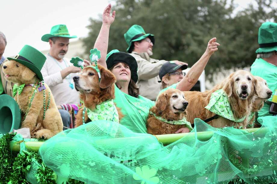 Passengers of the Golden Beginnings Golden Retriever Rescue parade float throw beads at spectators during the 36th Annual 1960 St. Patrick's Day Parade on Sunday, March 16, 2014, on FM 1960. / MICHAEL MINASI