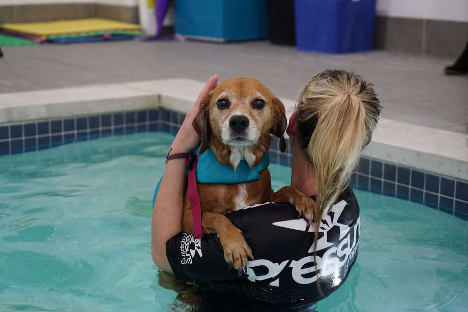 Kelly Coupe, the head swim coach at K9 Aquatic Center, with Ditto. Ditto's owners say swimming has helped her recover from major back surgery. Photo: Washington Post Photo By Patrick Martin. / The Washington Post