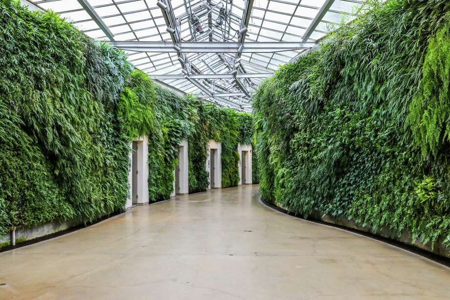 Living walls are best left to pros and ex-presidents - Connecticut Post