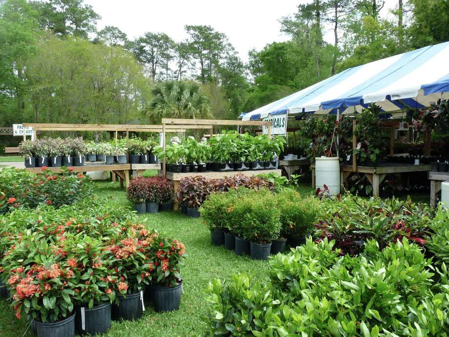 The tropical plants section at Mercer Botanic Garden's March Mart. Photo: Mercer Botanic Gardens