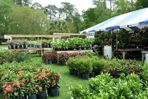 The tropical plants section at Mercer Botanic Garden's March Mart.