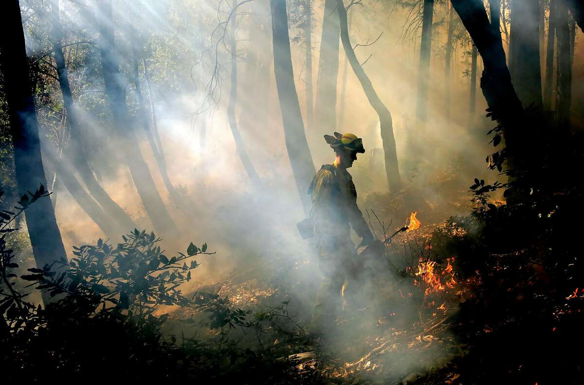 Keith Martinson with Cal Fire lays down fire from a drip torch during a control burn in the Jenner Headlands Preserve to burn the dry vegetation that covers the forrest floor, above the town of Duncans Mills, Calif., on Tues. Feb. 27, 2018.