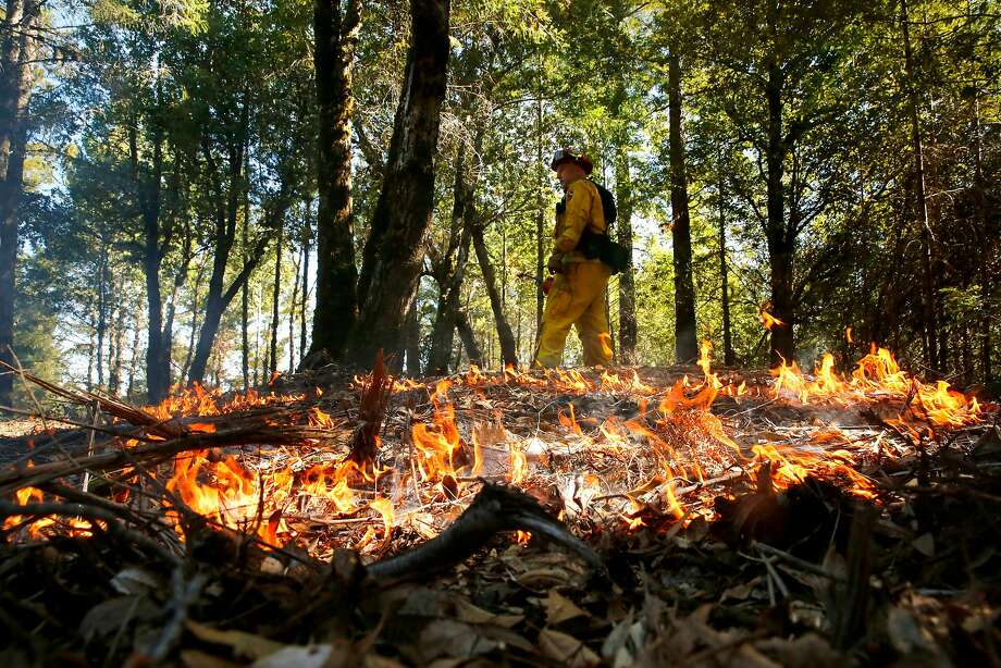 Cal Fire Capt. Mike Heyfron lays down fire from a drip torch during a controlled burn in the Jenner Headlands Preserve. Photo: Michael Macor, The Chronicle