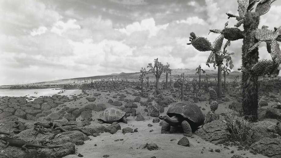 """Hiroshi Sugimoto, """"Galapagos"""" (1980) Photo: Fraenkel Gallery"""