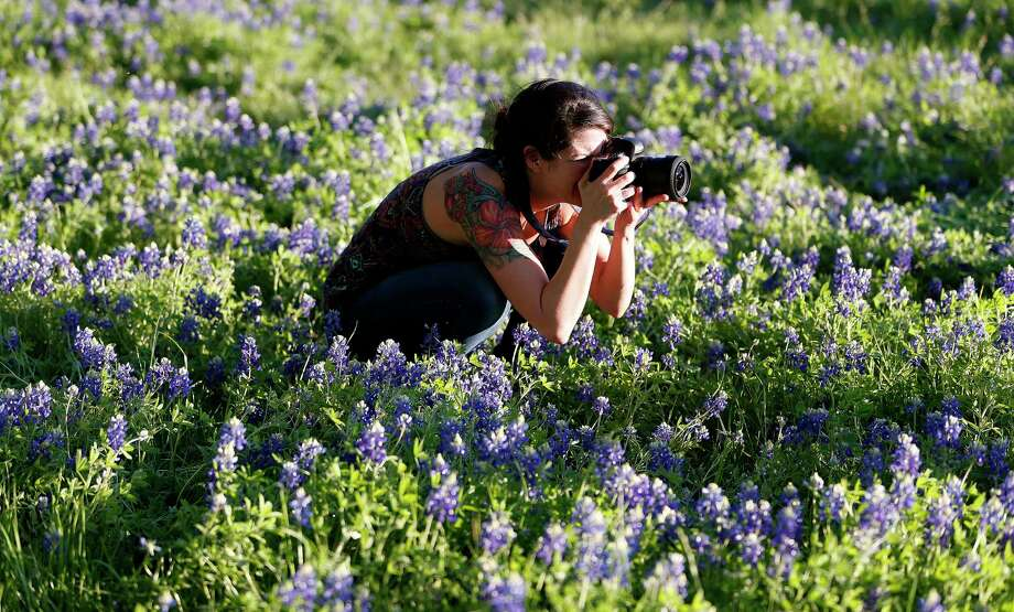 Photographer Julie Doniero takes photos in a patch of bluebonnets along White Oak Bayou on East T.C. Jester. Photo: Karen Warren, Staff / © 2015 Houston Chronicle