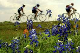 Riders roll past a patch of bluebonnets following lunch during the  BP MS 150, just outside Belleville, Texas.