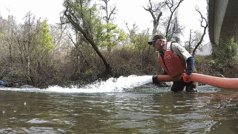 Brad Carter, of the U.S. Fish and Wildlife Service, releases some of the 200,000 winter-run Chinook salmon that are being restored to Battle Creek, a tributary of the Sacramento River. The $100 million project is an attempt to protect the endangered fish from drought and climate change. Photo: Laura Mahoney, Associated Press
