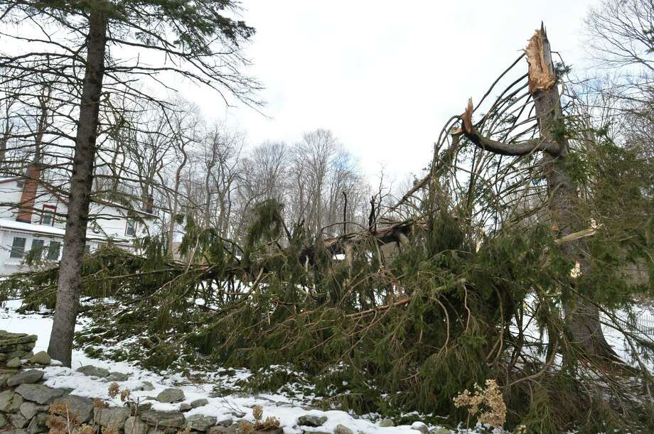 A tall evergreen tree is split in two off Kensett Road after Wednesday's nor'easter. Photo: Alex Von Kleydorff / Hearst Connecticut Media / Norwalk Hour