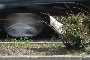 A plastic bag is stuck in a bush near Riverside Commons shopping center in the Riverside section of Greenwich, Conn. Monday, May 8, 2017.