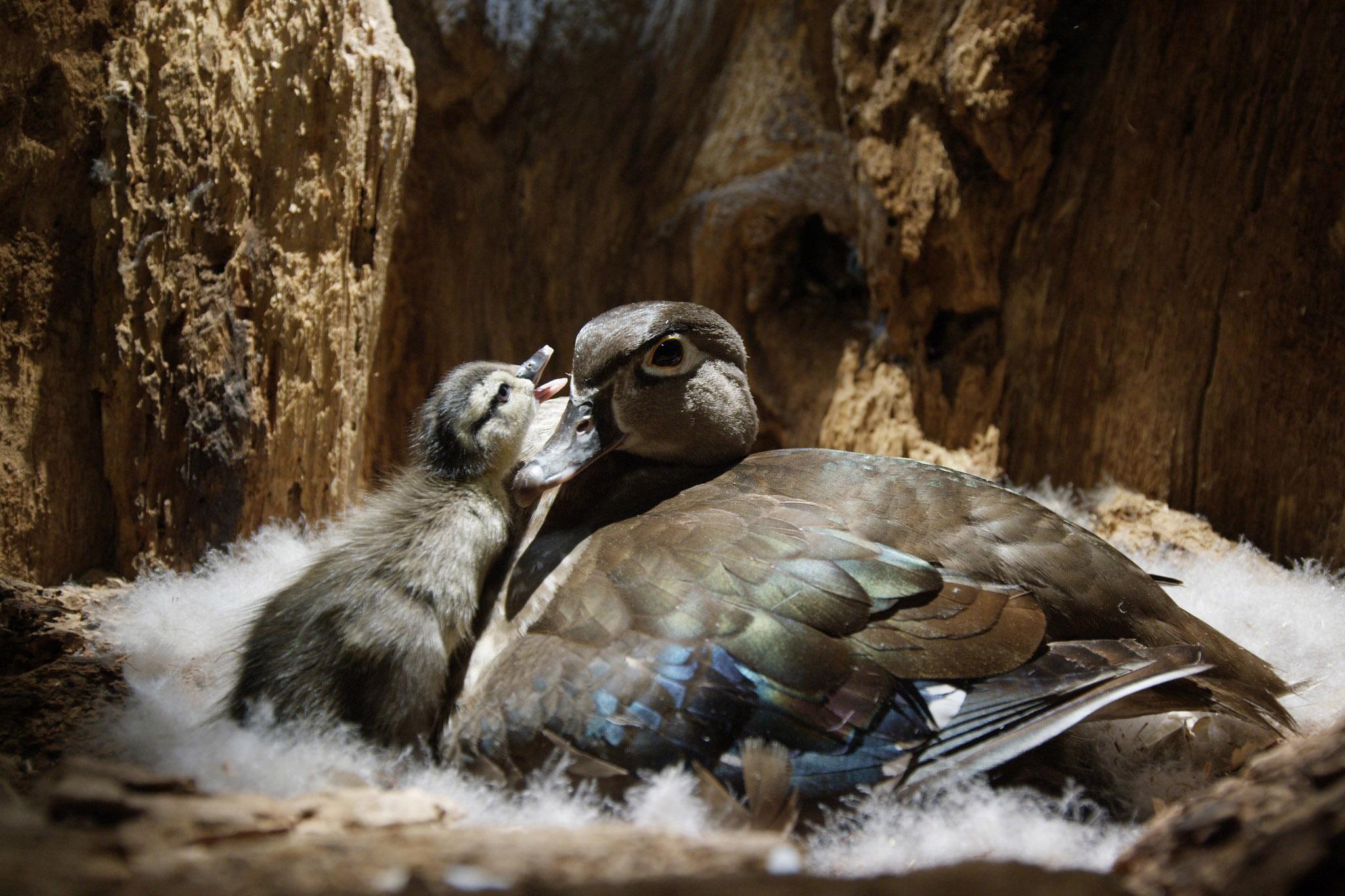 Stunning New Imax Film Backyard Wilderness To Open At