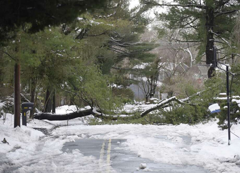 A fallen tree blocks Hemlock Drive in Stamford, Conn. Thursday, March 8, 2018. The area received about eight inches of snow with strong winds Wednesday and crews spent Thursday removing fallen trees and restoring power to the community. Photo: Tyler Sizemore / Hearst Connecticut Media / Greenwich Time