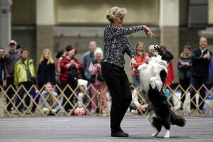 Ailynn Collins performs with her english sheepdog Violet in the freestyle competition during the annual Seattle Kennel Club Dog Show at the CenturyLink Event Center, March 11, 2018.