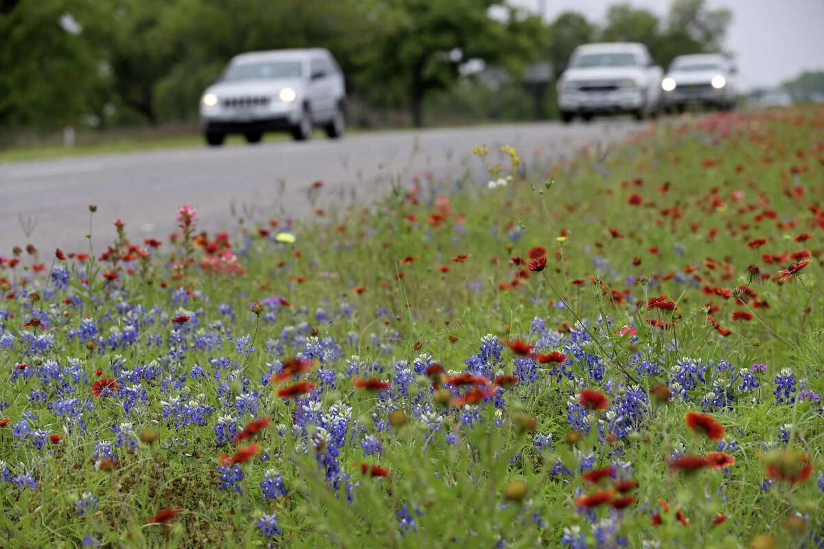Indian Blankets, (Gaillardia pulchella) and Texas Bluebonnet, (Lupinus texensis), dot areas along U.S. 181 just northwest of Floresville, March 27, 2017.