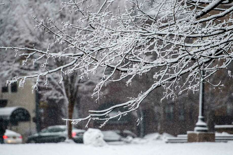 Snow sticks to branches of a tree in Washington Park as the third nor'easter hits the Capital Region in 10 days Tuesday March 13, 2018 Albany, N.Y. (Skip Dickstein/Times Union) Photo: SKIP DICKSTEIN, Albany Times Union