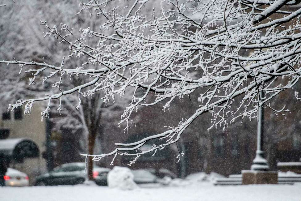 Snow sticks to branches of a tree in Washington Park as the third nor'easter hits the Capital Region in 10 days Tuesday March 13, 2018 Albany, N.Y. (Skip Dickstein/Times Union)