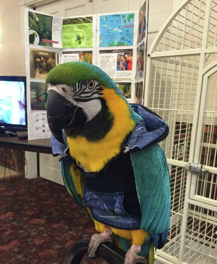 Bird lovers from around the state and beyond are invited to the annual Feather Fest in Middletown. Photo: Contributed Photo /Connecticut Parrot Society